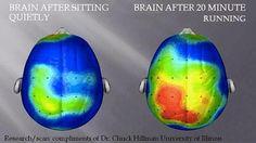 Cérebro depois de se sentar calmamente.  Cérebro depois de 20 minutos de corrida.