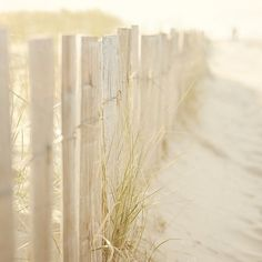 Seaside picket fence in a sunlit sand dune Coastal Style, Coastal Living, Modern Coastal, Foto Picture, I Love The Beach, Shades Of White, Pale White, White Sea, White Light