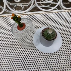 miniserra per cactus