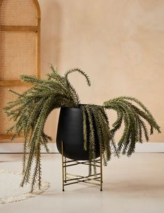 Black & Brass Plant Stand Black Plant Stand, Plant Stands, Foam Seat Pads, Popular House Plants, Brown Leather Chairs, Garden Plants Vegetable, Elements Of Nature, Havana Brown, Faux Plants