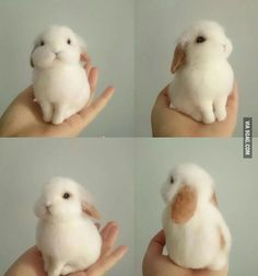 Bunny perfection. Someone has some talent...