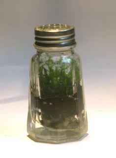 bottle garden, in a salt shaker!