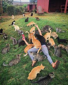 Need to visit this Hawaiian cat sanctuary.