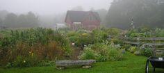 Island Flowers, Verona Island, Maine, visit full profile @ http://gayweddingsinmaine.com/island-flowers.html