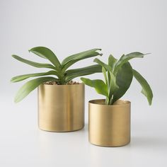 Natural Brass Planter | Schoolhouse Electric