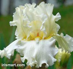 Tall Bearded Irises at Iris Mart: bearded & reblooming Irises Fantastic Garden
