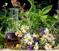 Bylinkové sirupy liečia a skvele chutia: Pripravte si ich doma aj vy! Magic Herbs, Juicing For Health, Herbal Medicine, Korn, Herbalism, Ale, Healing, Plants, Paranormal