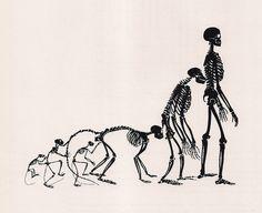 Evolution of Homo Sapiens