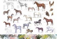 Paarden, anatomie en paardenrassen