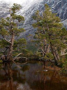 Overland Track, Tasmania Great Walks, Fantasy City, Natural Scenery, Tasmania, Australia Travel, Places To See, Adventure Travel, Beautiful Places, Island