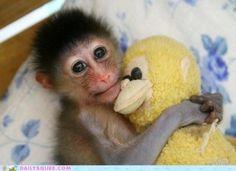 monkey cuddles
