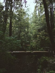 Kevin Russ | Big Basin Redwoods State Park, California