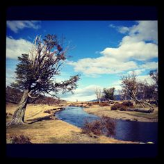 Ushuaia, Argentina   Day 1: Location Scouting    Lapataia National Park  Walking around the park...
