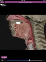 Dysphagia app... pretty neat. Provides animation of several different swallows.
