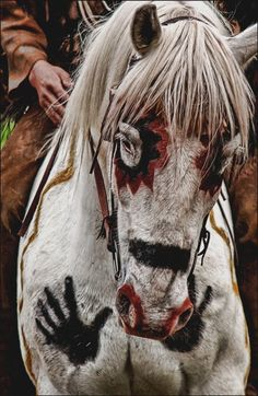This is a photo of a Kiowa horse with war paint and was taken on the set of the movie Shadowplay.