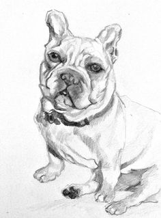 trent-french-bulldog