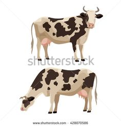 Spotted cow vector illustration set. Cute farm cattle domestic animal collection. - stock vector