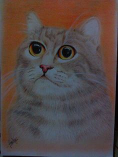 Cat again, cat in orange, my third cat drawing... :D