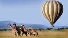 Tick hot air ballooning off your bucket list with Rhino Africa. Read on for our recommended lodges to experience ballooning from. Balloon Rides, Hot Air Balloon, Air Ballon, Uganda, Zanzibar Beaches, Tanzania Safari, Travel Channel, African Safari, Day Tours