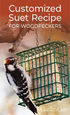 to make your own suet cakes Want to bring more woodpeckers to your yard? Try out our suet recipe catered to their tastes!Want to bring more woodpeckers to your yard? Try out our suet recipe catered to their tastes! Bird House Plans, Bird House Kits, Suet Recipe, Diy Recipe, Woodpecker Feeder, Suet Bird Feeder, Squirrel Feeder, Suet Cakes, Bird Seed Ornaments