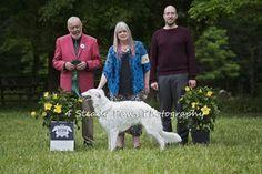 Deuce - Award of Merit East Coast, Photography, Animals, Photograph, Animales, Animaux, Fotografie, Photoshoot, Animal