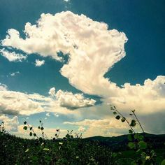 Fishlake National Forest #clouds #sky #wilderness #aspen by earth_to_milo