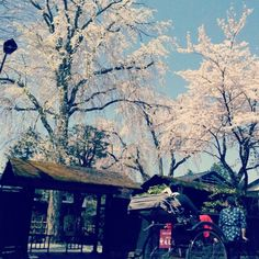 Kakunodate ,Akita,Japan  角館