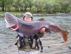 Mongolian Taimen #fishing #hunting #fisherman #fish