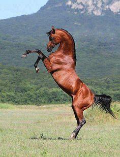 Looks like an Arabian to me because of head shape. Beautiful.