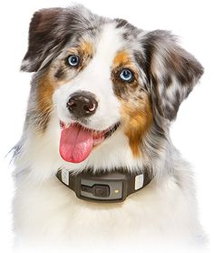 1173633456 besides Bayer Seresto Collar Small Pounds P 187 furthermore Hawx besides 1173890912 also 1175878847. on bluetooth collars for dogs