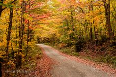 Favorite route through Sugar Hill fall foliage - New England fall foliage