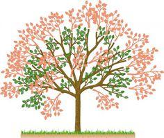 Süßkirschbaum kürzen