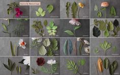 Bilderesultat for the fine art of paper flowers: a guide to making beautiful and lifelike botanicals How To Make Paper Flowers, Crepe Paper Flowers, Institute Of Contemporary Art, Paper Leaves, Hybrid Tea Roses, Giant Paper Flowers, Paper Models, Flower Making, Fine Art Paper