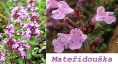Mateřídouška (tymián) - účinky na zdraví, co léčí, použití, užívání, využití - Bylinky pro všechny Life Is Good, Herbs, Flora, Plants, Relax, Health, Life Is Beautiful, Herb, Planters