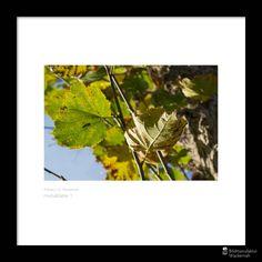 nice Fotografie »Herbstblätter 1«,  #Herbst #Naturansichten