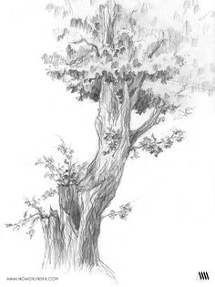The gallery of personal drawings presenting architecture, greenery, geometry and other. Plant Sketches, Tree Sketches, Art Drawings Sketches, Nature Sketch, Nature Drawing, Plant Drawing, Tree Drawings Pencil, Pencil Trees, Cloud Drawing