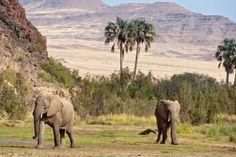Desert Elephants at Okahirongo Elephant Lodge -- Purros Conservancy -- Luxury Safari Lodge in Namibia