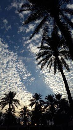 #beautiful #Iraq #Najaf #clouds #palm_trees #nature #amazing #evenings