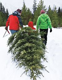 I have so many memories of cutting our own tree with my son and grandsons, but cutting a Christmas tree goes all the way back to when my grandfather grew Scotch Pines on 2.5 acres and sold them for $3 each.