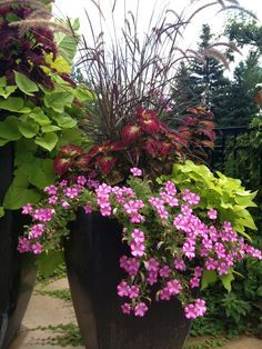 Gorgeous Full Sun Container Plants Ideas To Make Up Your.- Gorgeous Full Sun Container Plants Ideas To Make Up Your Garden Container garden ideas - Garden Shrubs, Patio Plants, Outdoor Planters, Garden Planters, Garden Landscaping, Outdoor Gardens, Flower Planters, Flower Pots, Porch Planter