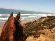 Horse riding treks Paihia, Bay of Islands Experience a magical 1 or 2 hour horse trek with outstanding views of the beautiful Bay of Islands & the Pacific Ocean. Bay Of Islands, Pacific Ocean, Horse Riding, New Zealand, Trek, Remote, Coast, Southern, Tours