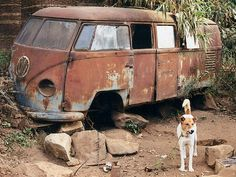 VW 11 w guard dog Volkswagen Bus, Vw T1, T2 Bus, Rust Never Sleeps, Car Barn, Rust In Peace, Rusty Cars, Abandoned Cars, Barn Finds