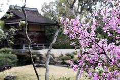 Oravanpesä: JAPANI 2016 osa 6: Nara Isuien