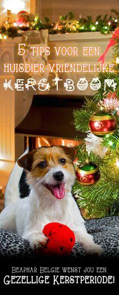 5 tips voor een huisdier-vriendelijke kerstboom