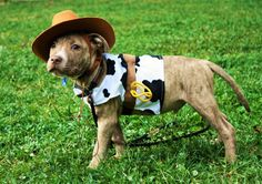 The worlds cutest cowboy!