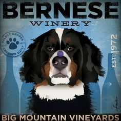 Bernese Mountain Dog Winery giclee = need this