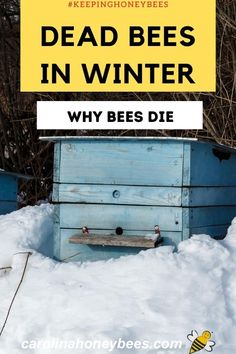 Dead Bees, Backyard Beekeeping, Chicken Tractors, Worm Farm, Worm Composting, Annual Plants, Save The Bees, Small Farm, Bees Knees