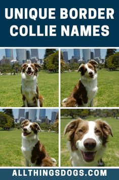 Border Collies are one of the most popular breeds of dog in America. If you want to choose a name that reflects the popularity of the Border Collie, you could use one of our unique Border Collie names. Check out the list now! Border Collie Mix Puppies, Border Collie Names, Collie Dog, Border Collies, Dog Names Unique, Best Dog Names, Puppy Names, Cute Borders, Boy Names