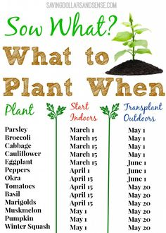 Check out this handy gardening chart to know when to start growing your seeds indoors and when to transplant them outdoors.