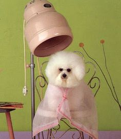 These 12 dogs were groomed to look like other animals by their pet care tips for dog grooming lol i laughed so hard solutioingenieria Images